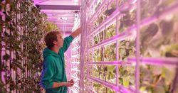 Портативные фермы в морских контейнерах – будущее городского сельского хозяйства