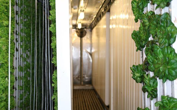 Последний тренд — превращение старых морских контейнеров в гидропонные фермы, отличающиеся высокой эффективностью и производительностью.