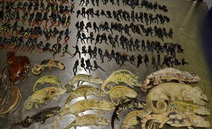 Контрабанда животных в морских контейнерах