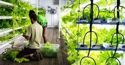 Контейнерные фермы – будущее мирового сельского хозяйств